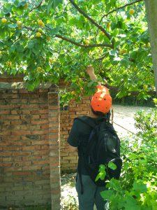 pick the apricot_20160619_142422
